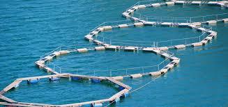 itticoltura